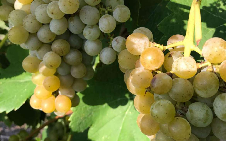 2016 Harvest Recap